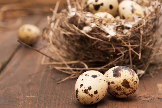 Dampak Buruk Jika Terlalu Banyak Konsumsi Telur Puyu